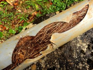 need-sewer-line-repair-signs